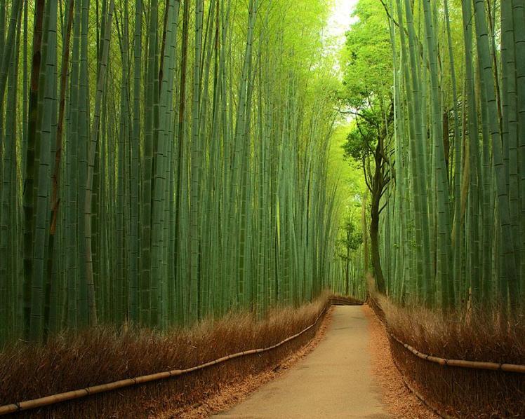 bamboo_japan